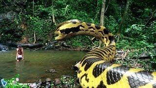 getlinkyoutube.com-VIDEOBUSTER.de zeigt PIRANHACONDA - Anaconda und Piranha! deutscher Trailer HD zur DVD & Blu-ray