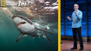 getlinkyoutube.com-Great White and Oceanic Whitetip Sharks: Photographing Top Ocean Predators  (Part 3) | Nat Geo Live