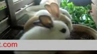 getlinkyoutube.com-World Rabbit Farm