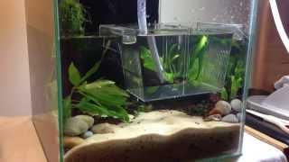 getlinkyoutube.com-HOW TO: Making a Nano Red Cherry Shrimp Planted Aquarium | TonyTanks