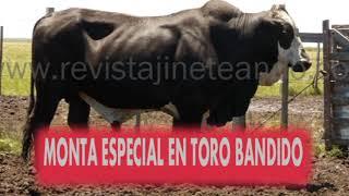 getlinkyoutube.com-TORO BANDIDO EN PIEDRA SOLA - TACUAREMBO -  VS. ALEJANDRO DELGADO (EL SETENTA)