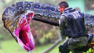 ✔ The Man Eating Anaconda - The Biggest Snake in The World - [ Documentary ] width=