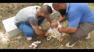 getlinkyoutube.com-العثور على سحرواعمال شعوذة في مقبرة هيليو بوليس(ولاية قالمة) اثناء حملة نظافة