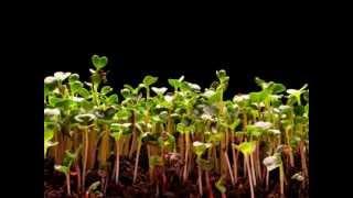 getlinkyoutube.com-خلفية مونتاج - خروج نبات من الأرض بتقنية (timelapse)
