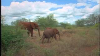 getlinkyoutube.com-Elephant Orphans -- Wisdom of the Wild