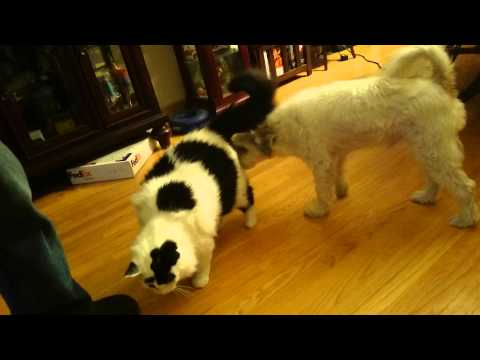 Dog and Cat demonstrate successful negotiations