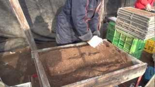 getlinkyoutube.com-Sowing welsh onion 長葱播種
