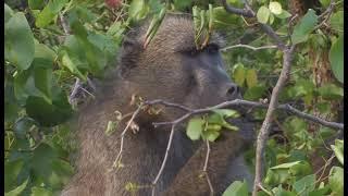 getlinkyoutube.com-Kruger National Park Camps Disk 1 HD - South Africa Travel Channel 24