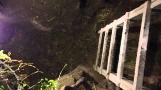 getlinkyoutube.com-Кролики в яме как в раю 2