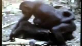 getlinkyoutube.com-L'omosessualitá é naturale (Documentario sulla vita animale)