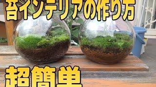 getlinkyoutube.com-簡単に作れる苔インテリア!【苔テラリウム】