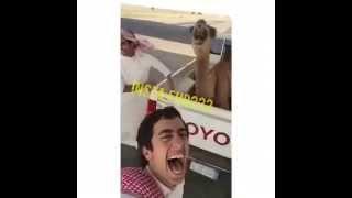 getlinkyoutube.com-هيه هاه حاشي قسم بالله ضبطوها هههههههههههههههههه