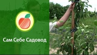 Опоры для низкорослого сада
