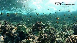 Snorkeling Hawaii | GoPro Hero 4 Black Test - 1080p 120fps