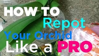 getlinkyoutube.com-How to Repot Your Orchid in Spagnum Moss Like A Pro STEP BY STEP