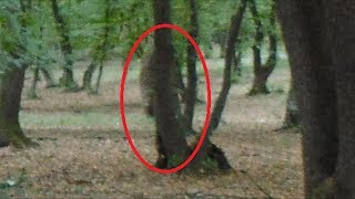 Hoia Baciu | The World's Most Haunted Forest Documentary