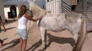 getlinkyoutube.com-Horses saved from death