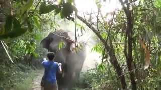 getlinkyoutube.com-live elephant attack