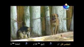 getlinkyoutube.com-مركز تدريب كلاب الحراسة   شاهد  و استمتع