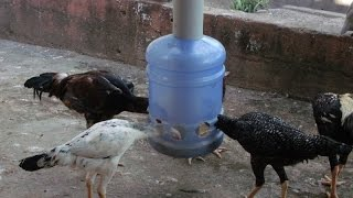 getlinkyoutube.com-Comedouro Caseiro para frangos e galinhas