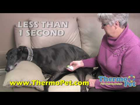 ThermoPet worlds first non-contact dog thermometer with talking results