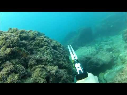 spearfishing israel   -    
