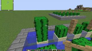 getlinkyoutube.com-How to make an auto cactus farm! (No redstone)