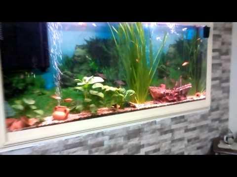 Come installare un acquario a parete tutto per casa - Acquario da casa ...