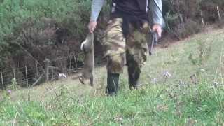 getlinkyoutube.com-Hatsan M125 Rabbit  Hunt Open Sights