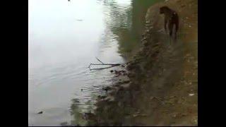 getlinkyoutube.com-meen pidutham dog