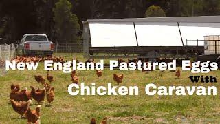 getlinkyoutube.com-New England Pastured Eggs with a Chicken Caravan