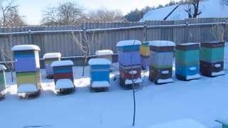 getlinkyoutube.com-Подкормка пчел зимой (обогрев улья)