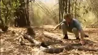 getlinkyoutube.com-Giant King Cobra of kerala.flv