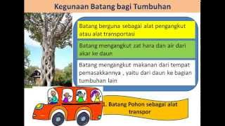 getlinkyoutube.com-Animasi Batang Tumbuhan