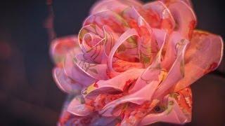 getlinkyoutube.com-DIY: Rose organza / Роза из органзы (цветы из ткани)
