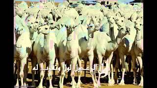 getlinkyoutube.com-شعتني علوم الصيف من البوم عبدالله بن عون اداء عزيز