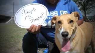 Austin Humane Society  ***AMAZING Video *** Must Watch