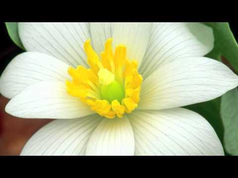 flores HD 1080p