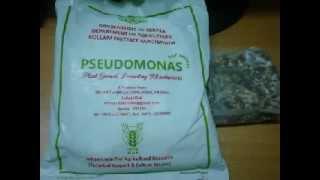 getlinkyoutube.com-What is  Pseudomonas.. കൃഷിക്ക്  ആവശ്യമായ  രീതിയില്  സ്യൂടോമോണസ്  എങ്ങനെ  ഉപയോഗിക്കാം