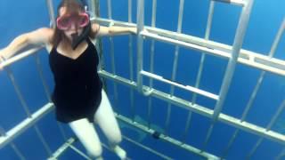 getlinkyoutube.com-Shark Cage Dive Hawaii North Shore HD