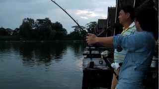 getlinkyoutube.com-ปลาบึกตัวใหญ่ที่บึงสำราญ