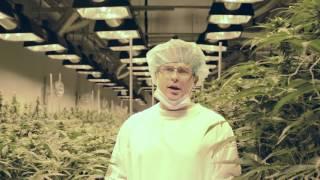 getlinkyoutube.com-Exclusive tour of CannTrust - Pesticide-Free Medical Marijuana Cultivation Facility in Canada
