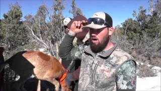 getlinkyoutube.com-Mountain Lion Hunting Two Toms in Three Days