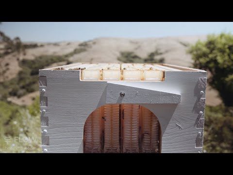 Californian backyard garden beekeeping
