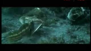 getlinkyoutube.com-Las profundidades marinas a las que nunca antes había llegado el hombre