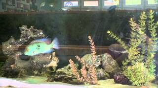 getlinkyoutube.com-Fish House: Rusty Wessel's aquatic playland with a home built for fish and ponds a plenty.