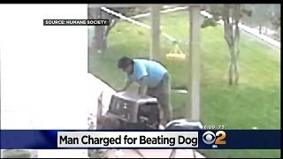 getlinkyoutube.com-Chino Hills Kids Catch Neighbor Allegedly Beating Dog In Backyard