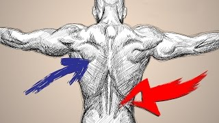 getlinkyoutube.com-How to Workout to Target LOWER BACK vs UPPER BACK
