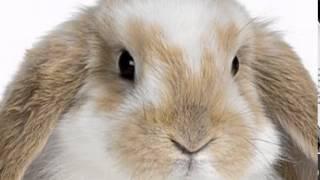 getlinkyoutube.com-Зайченцето бяло
