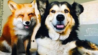 getlinkyoutube.com-14 AWESOME Animal Relationships